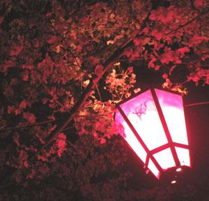 桜が満開だったので公園で花見してきた